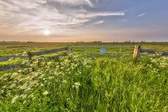 Disig solnedgång över staketet i den holländska polder arkivfoto