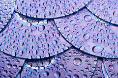 Disk and water drops Royalty Free Stock Photography
