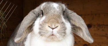 diskett kanin för öron Royaltyfria Foton