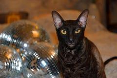 Diskospegeln klumpa ihop sig med en charmig katt arkivbild