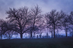 Dismal landscape with old cemetery. With trees and fog Stock Photo
