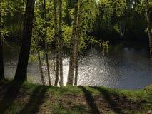 Disminución en parque de la primavera Foto de archivo