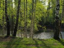 Disminución en parque de la primavera Fotos de archivo libres de regalías