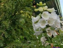 Disney Floral Στοκ Φωτογραφία