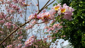 Disney Floral Στοκ εικόνες με δικαίωμα ελεύθερης χρήσης