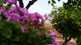 Disney Floral Στοκ Φωτογραφίες