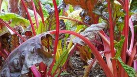 Disney Floral Στοκ φωτογραφία με δικαίωμα ελεύθερης χρήσης