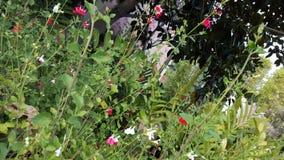 Disney Floral Στοκ Εικόνες