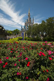 Disney Orlando castle with red rosea Royalty Free Stock Photo