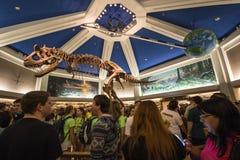 Disney's Animal Kingdom. Dinosaur - DinoLand - Orlando/FL - USA Royalty Free Stock Photography