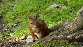 Disney Squirrel Stock Images