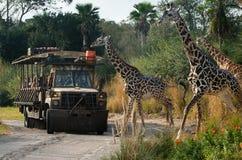 Disney värld Kilimanjaro Safari Animal Kindom Fotografering för Bildbyråer