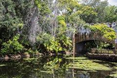 Disney värld Orlando Florida Animal Kingdom Fotografering för Bildbyråer
