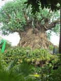 Disney world. Tree of life Stock Image