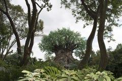 Disney Zwierzęcy królestwo - drzewo życie Zdjęcie Royalty Free