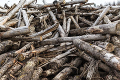 Disorderly piled old firewood Stock Image