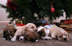Disordine dei cuccioli Immagini Stock