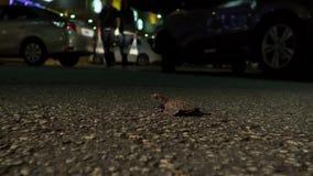 Disorientated молодые hatchlings черепахи hawksbill теперь светами городка bristols стоковая фотография