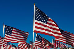 A dispaly of American flags with a sky background Royalty Free Stock Photography