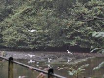 Disparado de um grupo de pássaros fotografia de stock royalty free