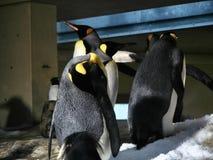 Disparado de um grupo de pinguins fotografia de stock royalty free