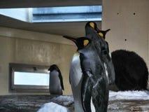 Disparado de um grupo de pinguins imagens de stock