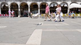 Dispare en Europa, gaviota y los paseos de las palomas alrededor de marcas del St ajustan entre gente en la ciudad almacen de video
