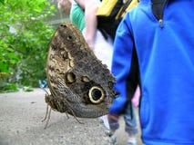 Disparo al campo de la mariposa Fotografía de archivo libre de regalías