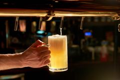 Dispensing draught beer in glass. Barman hand at beer tap pouring fresh cold beer. Beer pouring from a tap in restaurant Royalty Free Stock Photography