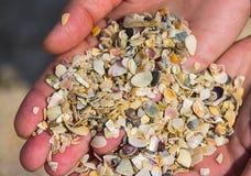 A dispersão de shell coloridos derramou na mão Fotografia de Stock