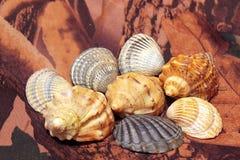 Dispersión de conchas marinas en el camuflaje Imagen de archivo libre de regalías
