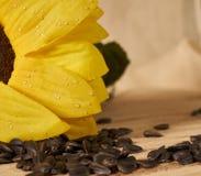 Dispersión de semillas Imagen de archivo libre de regalías