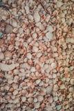 Dispersión hermosa de conchas marinas en la playa Fotos de archivo