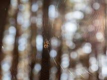 Dispersion de lumière du soleil par la toile d'araignée Image stock