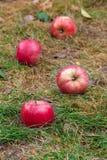 Dispersion des pommes sur l'herbe Photo stock
