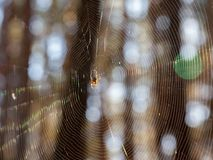 Dispersion of sunlight by cobweb. Optical effects on the spider web stock photography