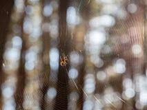 Dispersion of sunlight by cobweb Stock Image