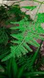 Dispersione verde fotografie stock