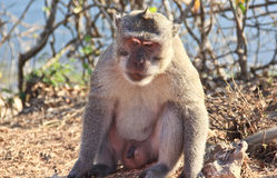 Dispirited monkey Stock Photo