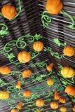 Display of assorted Pumpkins Stock Images