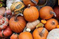 Display of assorted Pumpkins Stock Image
