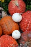 Display of assorted Pumpkins Stock Photos