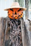 Display of assorted Pumpkins Stock Photo