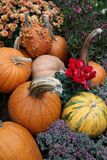 Display of assorted Pumpkins Royalty Free Stock Photography