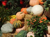 Autumn Pumpkins on Hay Background. Display of a variety of pumpkins, squash and gourds at an outdoor market with plants and flowers stock photo