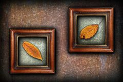Display of autumn symbols Stock Image