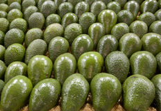 Display of avocados Stock Photography