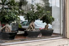 Display of bonsai trees in Montreal, Canada stock photo