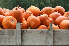 Display of bright orange pumpkins in a truck. Royalty Free Stock Photography