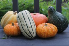 Assorted fall gourds displayed on rustic wood deck with foliage behind royalty free stock photography